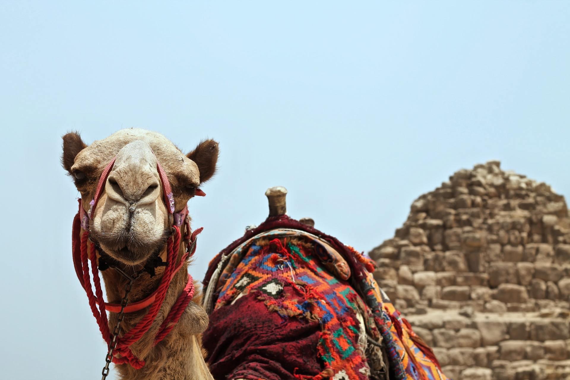 camel sand dessert